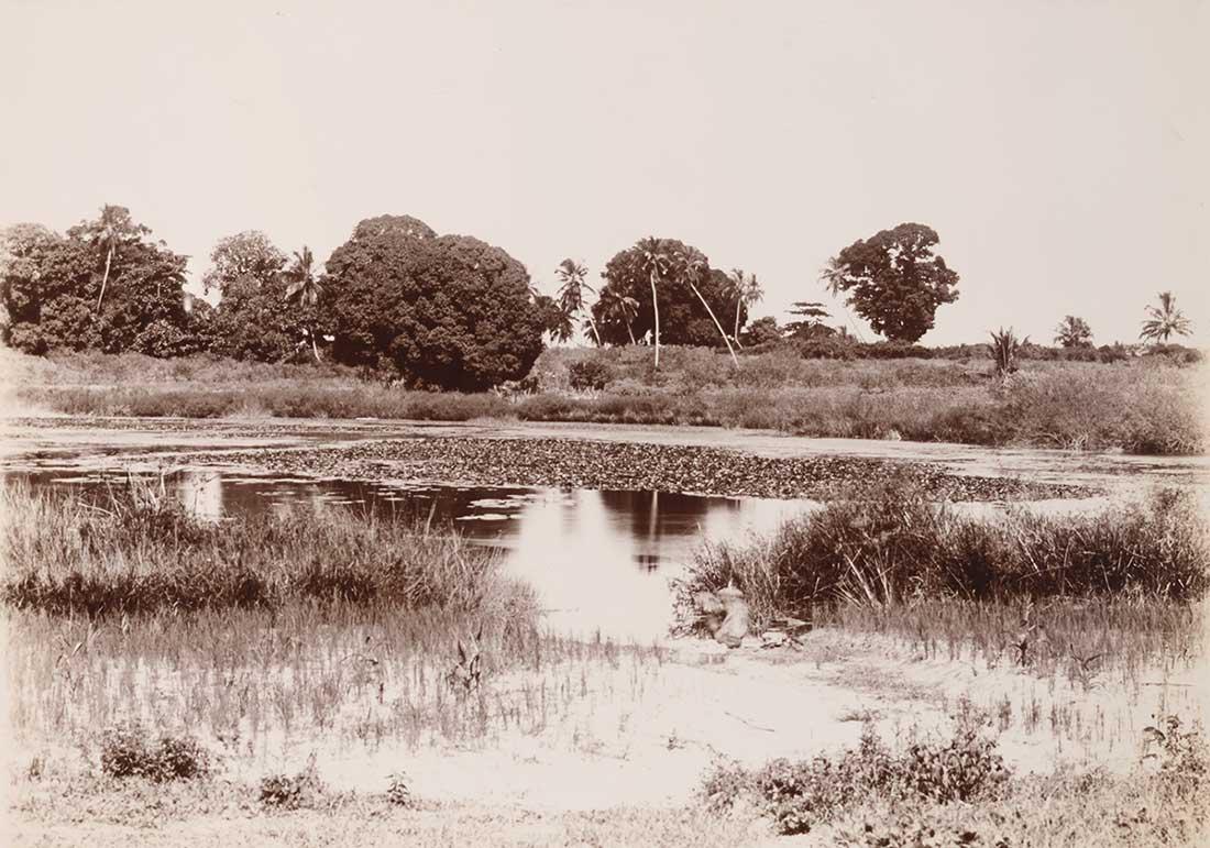 Ziwani swamp, N'Gambo, Zanzibar